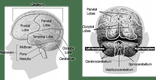 Neuromarketing – Geschmack wird durch Marketing im Gehirn erzeugt